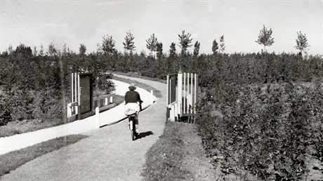 Bicycle path alongside the rowing course in the 40's