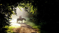 Horse riding in the Amsterdam Forest